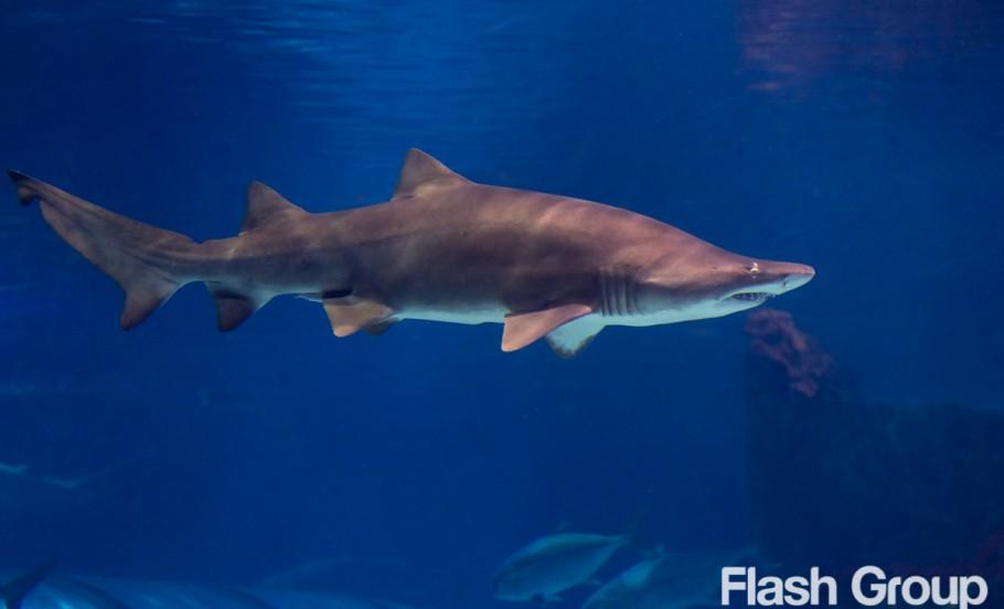 fotografia-zwierzat-poznan-oceanarium-barcelona-ryby-rekiny-28